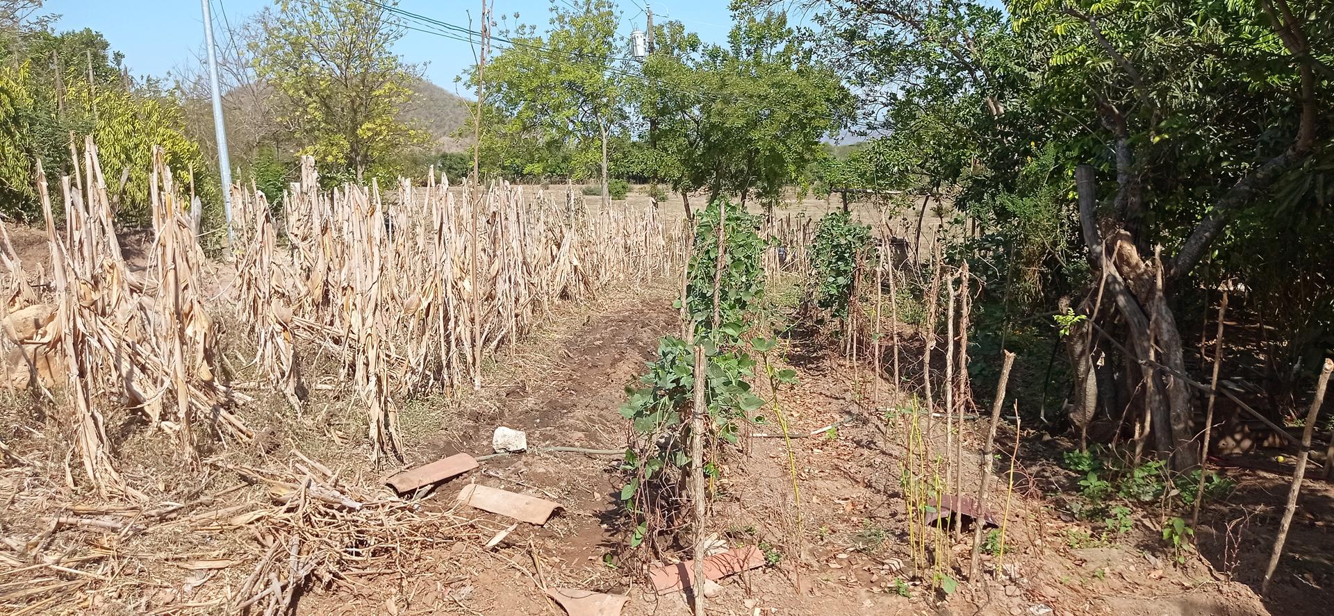 Los cuatro pilares de la seguridad alimentaria: Claves para mejorar las condiciones de desnutrición en las comunidades de Corredor Rioeste.